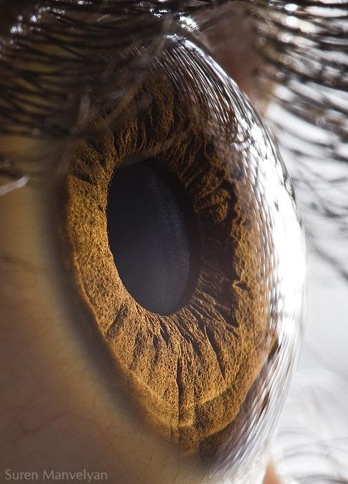 macro-eyes (3)