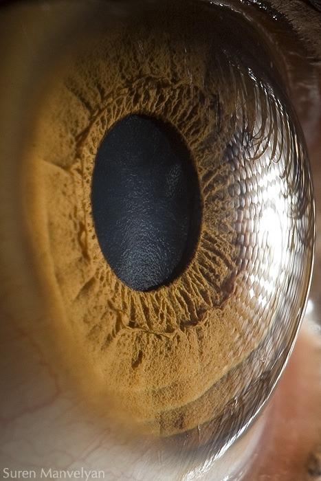 macro-eyes (7)