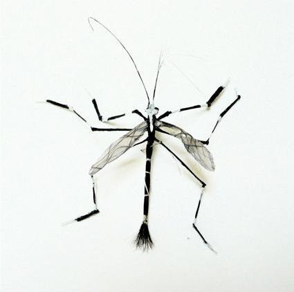 human-hair-insects2