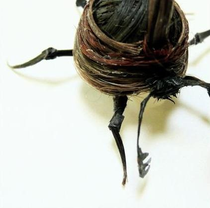 human-hair-insects7