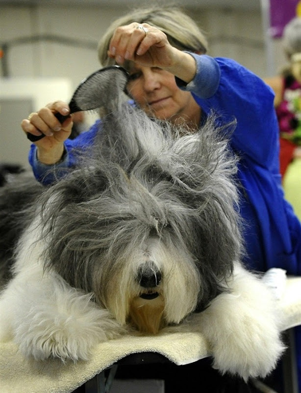 westminister-dog-show-2011-07