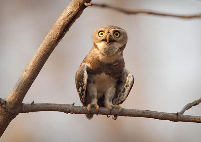 The World's Rarest Bird Photo Competition | Amusing Planet