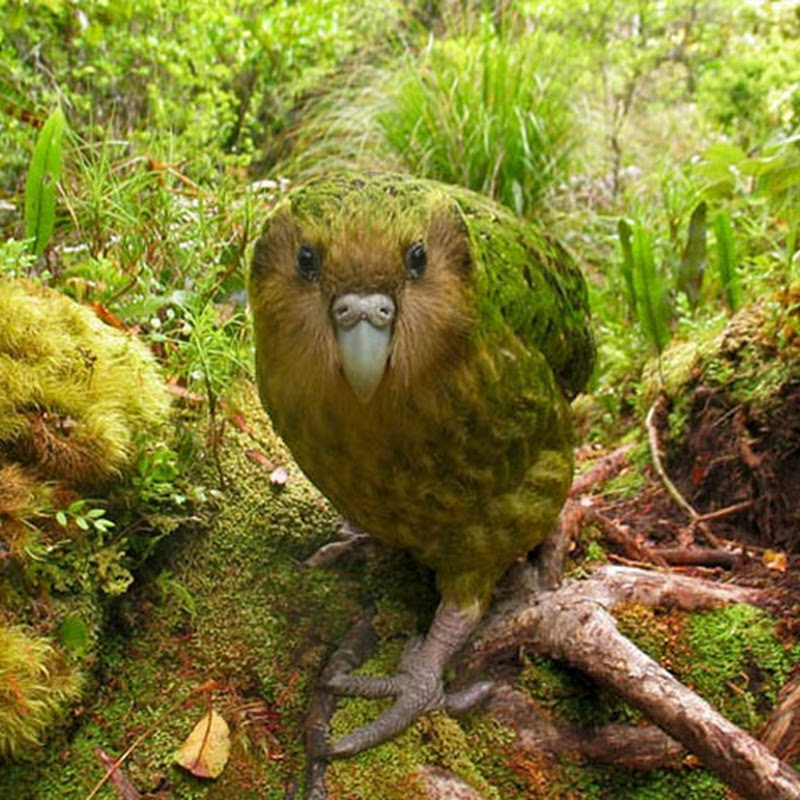 The World's Rarest Bird Photo Competition