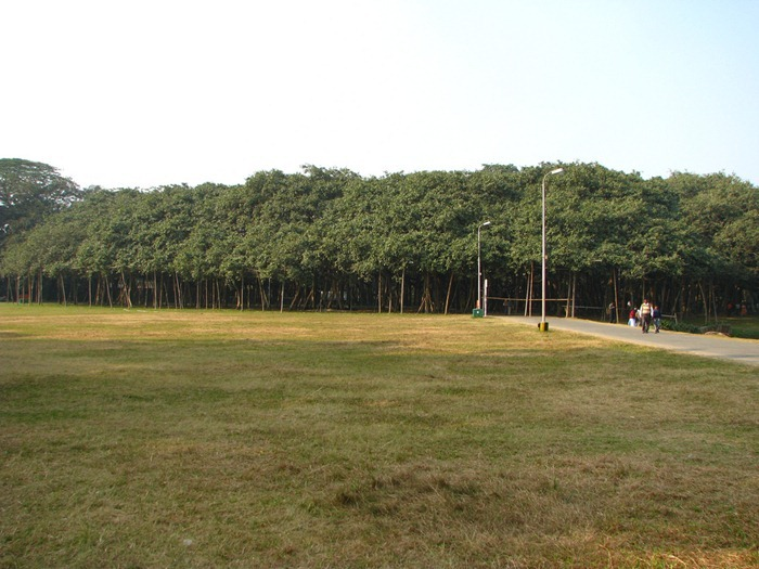 great-banyan-tree2