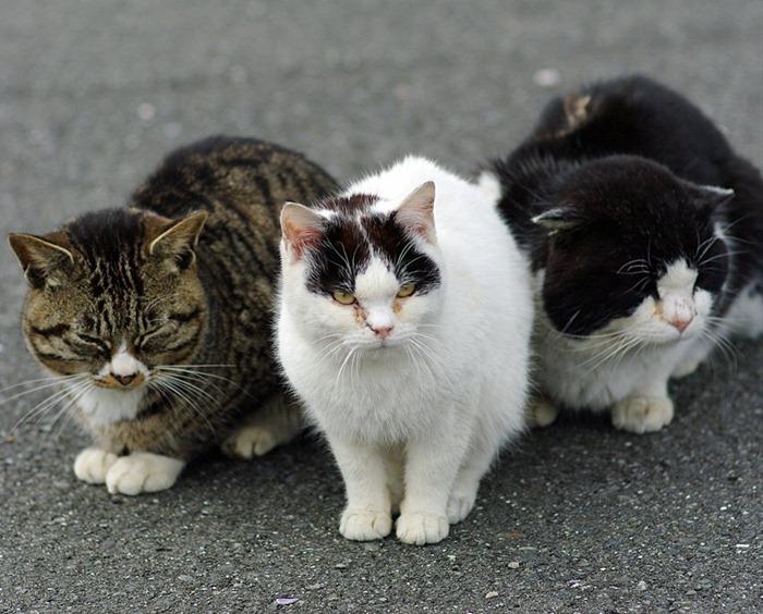 cat-island10