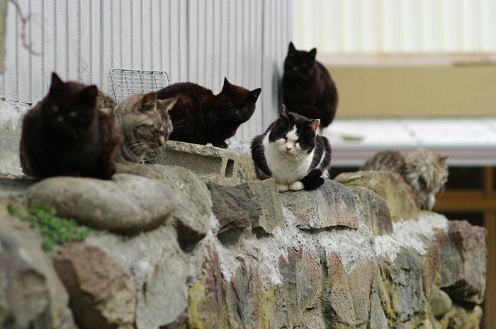 cat-island11
