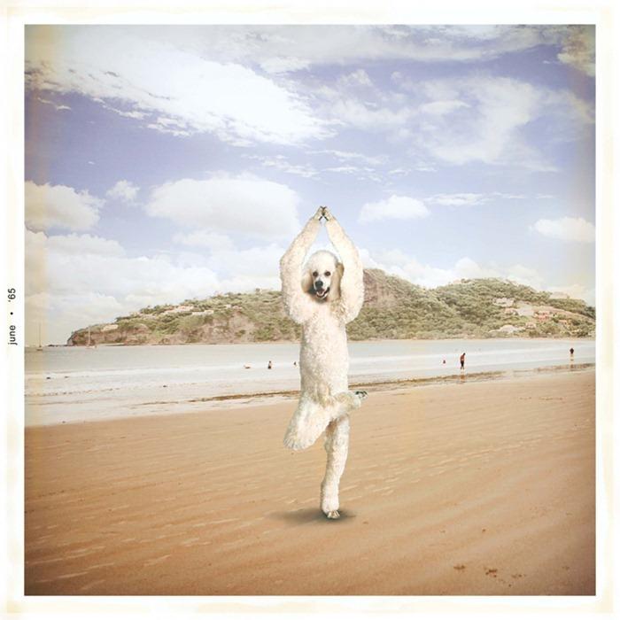 yoga-dogs7