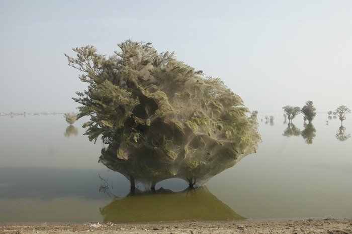 tree-cocoons6