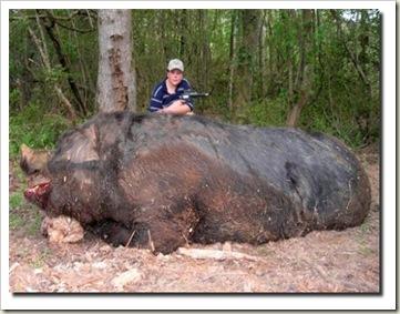 porco_gigante