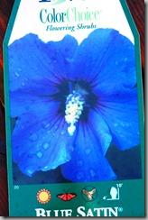 hibiscus blog 2