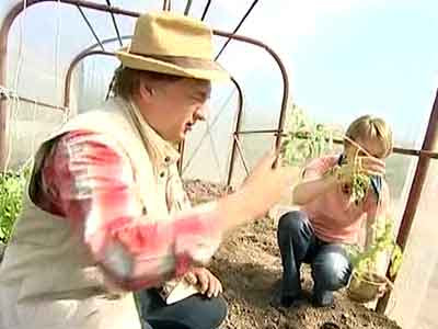 rassada-pomidor-01