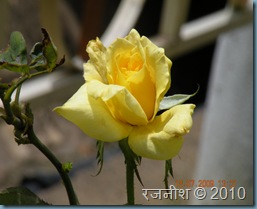 mysnaps_diwali 006