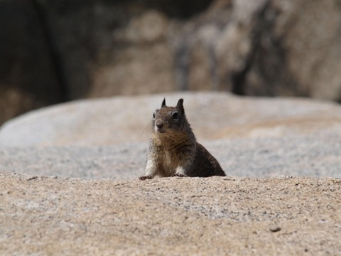 yosemite friend1