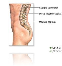 columna verterbral
