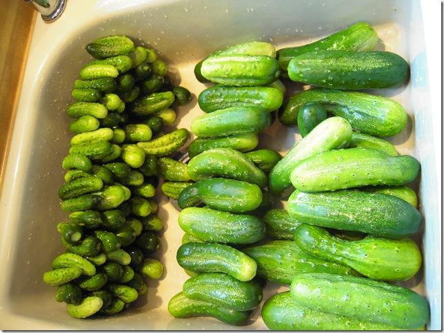 pickles 013