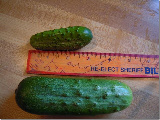 pickles 016