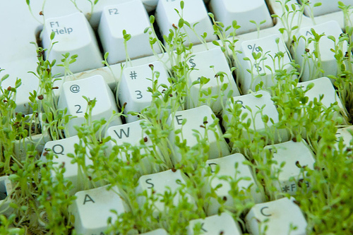 keyboard-grass