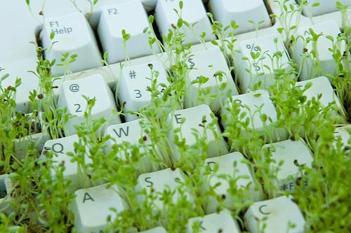 keyboard-grass
