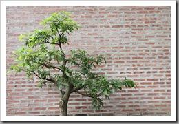 20090809_vietnam_0054