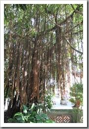 20090809_vietnam_0089