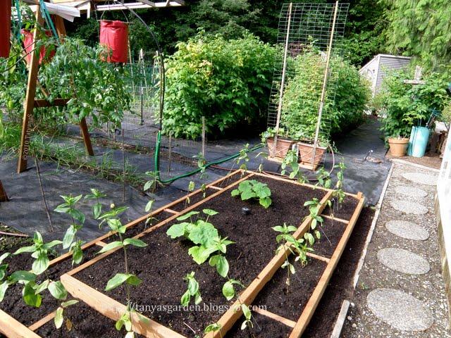 Mysecretgarden Sprucing Up A Vegetable Garden 2