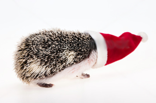 christmashedgehog copy