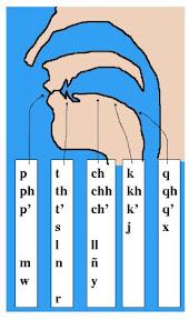 Consonantes aymaras y el aparato fonador