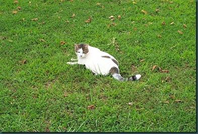 lawn cat 2