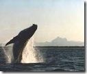 bb-whale5