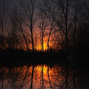 Sherbet Sunset by Jenny Gandert - Landscapes Sunsets & Sunrises ( gandert, reflection, sunset, trees )
