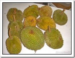 Durian-MYFH_20090630_2742-480