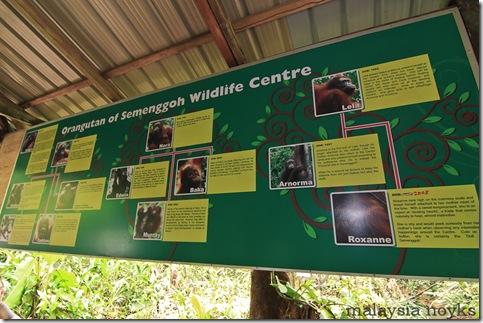 Semengoh Orangutan Rehabilitation Center 13