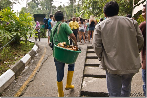 Semengoh Orangutan Rehabilitation Center 31