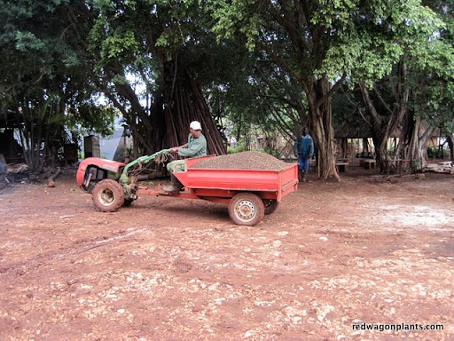 Potting soil in dump wagon