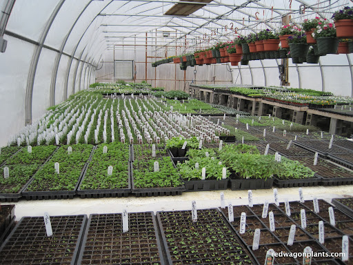 We now have 2 greenhouses full and 2 that are partially full.