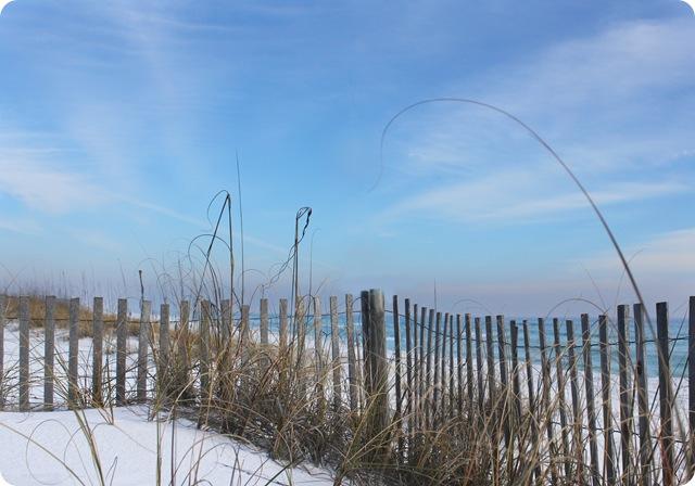 fence dune copy