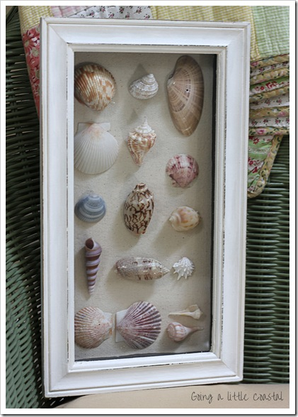 shells2