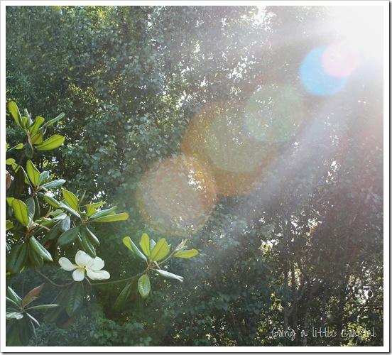 sunspots_edited-1