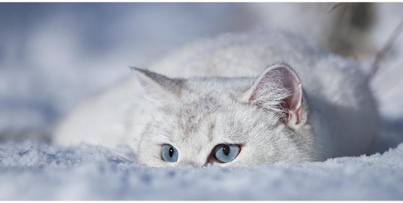 chat issy les moulineaux