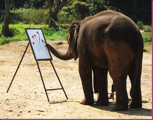elephant drawing at mae taeng elephant park