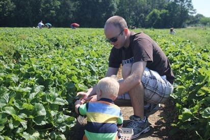 Strawberry Picking 14