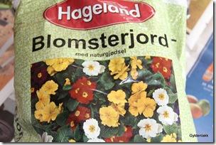 Prikleplanter settes i god blomsterjord