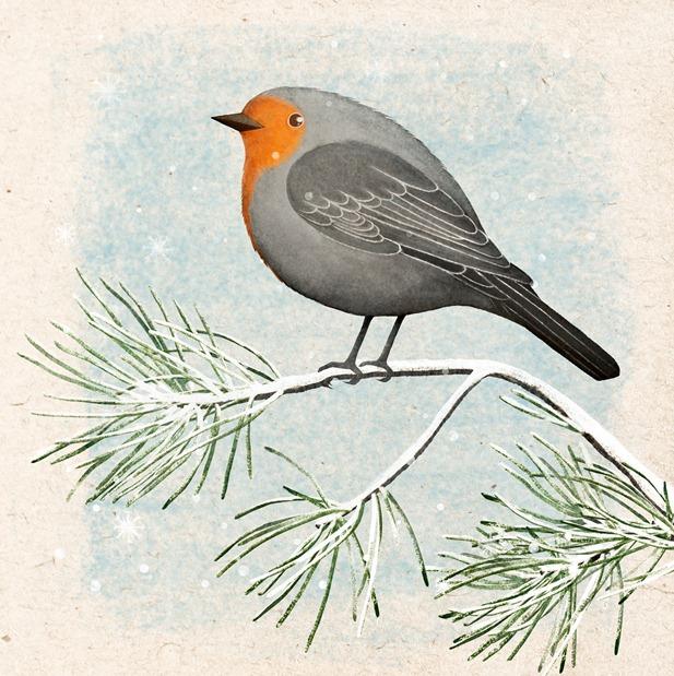 The Winter robin