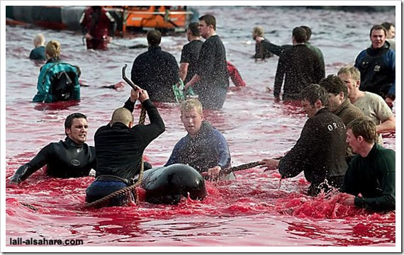 Hell is here in Denmark for Dolphins