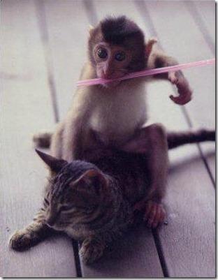 monkeyridescat