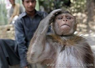 Monyet Dilatih Jadi Anggota Militer 3