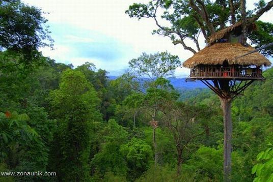 Rumah pohon (8)