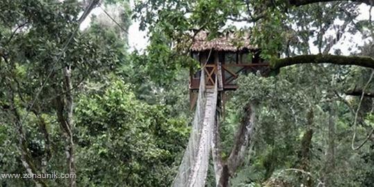 Rumah pohon (15)