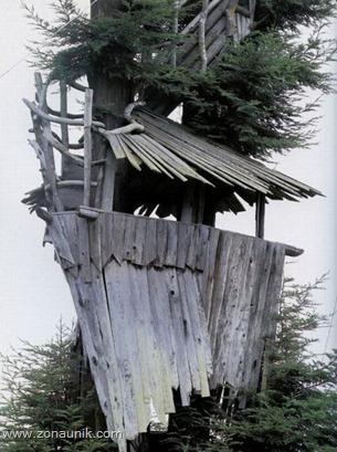 Rumah pohon (18)