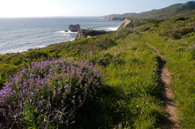 Point Reyes Coast Trail